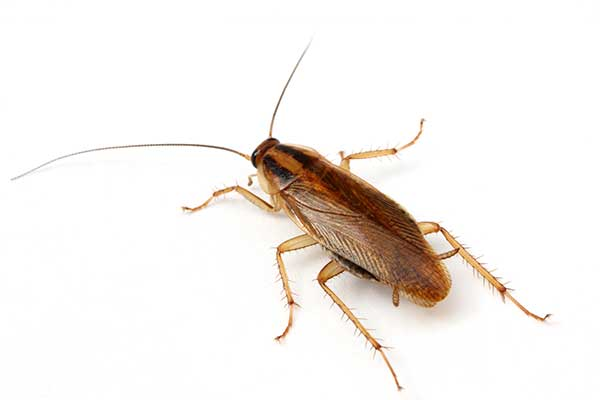 cockroach exterminators pest control portland oregon and vancouver washington