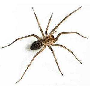 giant house spiders exterminators control removal Portland Longview Vancouver Washington WA