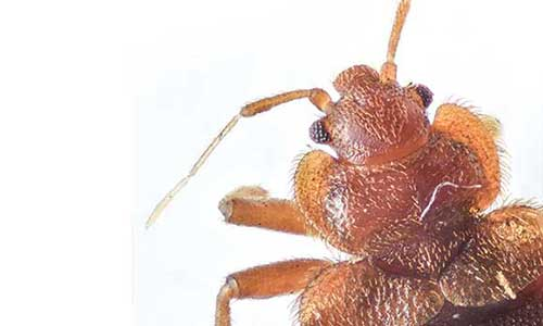 bed bug exterminators Vancouver WA Portland OR Metro Area