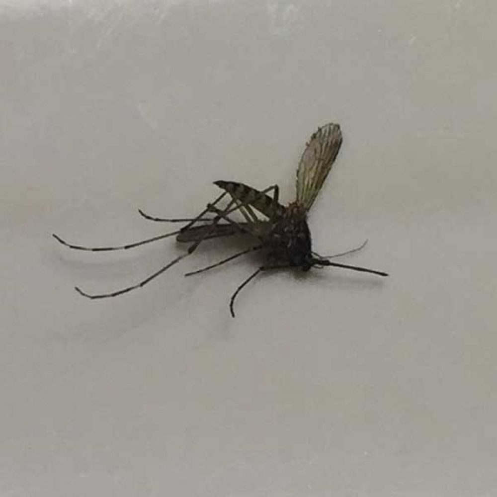mosquito exterminators and spraying Portland OR and Vancouver WA