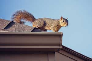 What to do about wildlife in your home - Pioneer Pest Portland OR