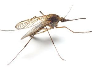 Mosquito Bites and the Zika Virus Pioneer Pest Services Vancouver WA Portland OR