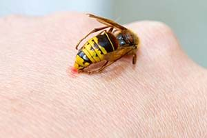 Information about bee wasp stings and more provided by Pioneer Pest Management Serving Portland Oregon