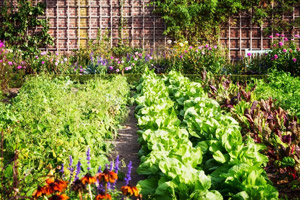 Flower and vegetable garden. Pioneer Pest Management serving Vancouver WA and Portland OR talks about the most destructive garden pests and how you can help deter them.