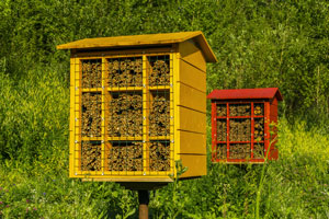 A look at a mason bee box. Pioneer Pest Management, serving Portland OR and Vancouver WA explains what you need to know about mason bees.